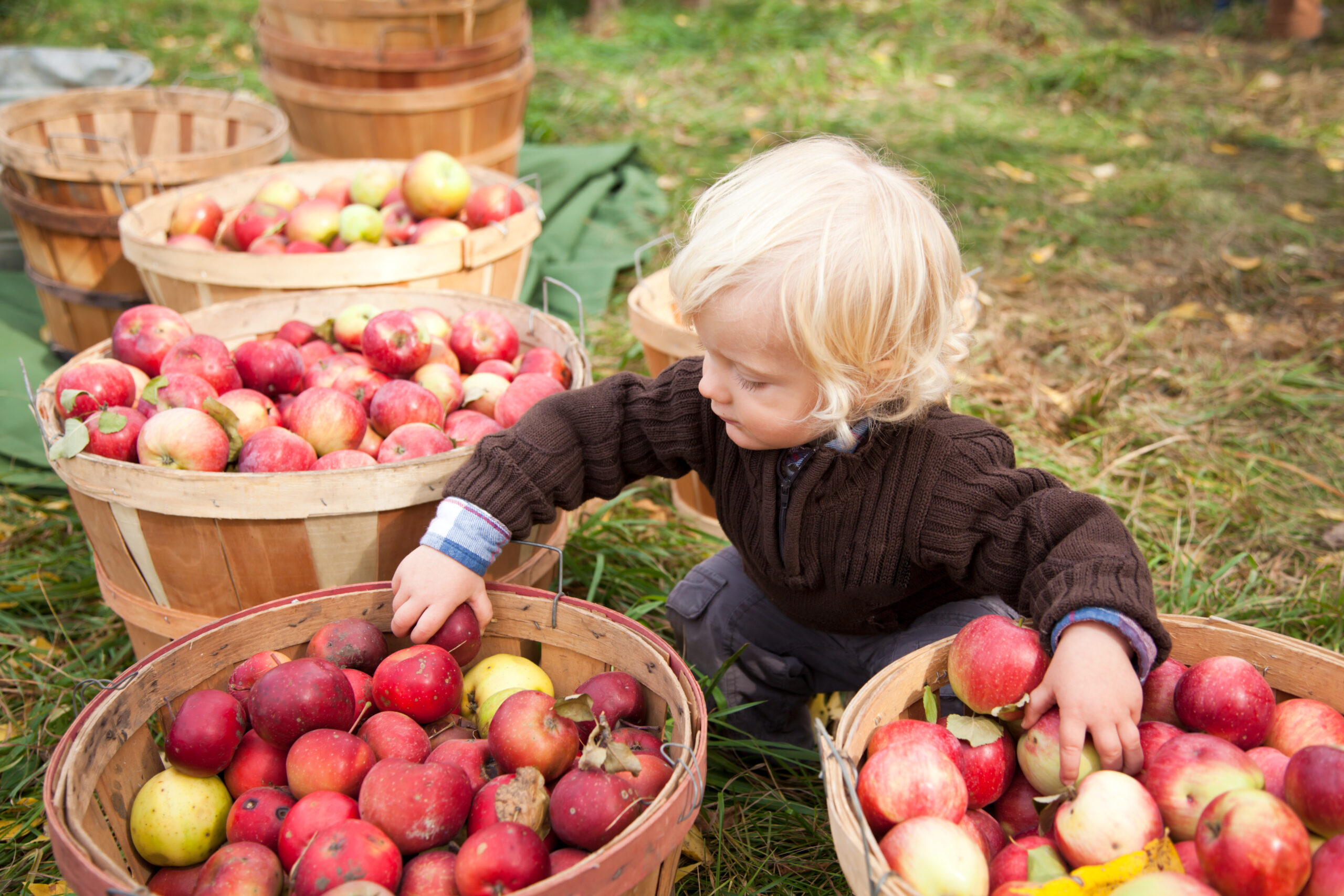 Boy picking up apples at the farm