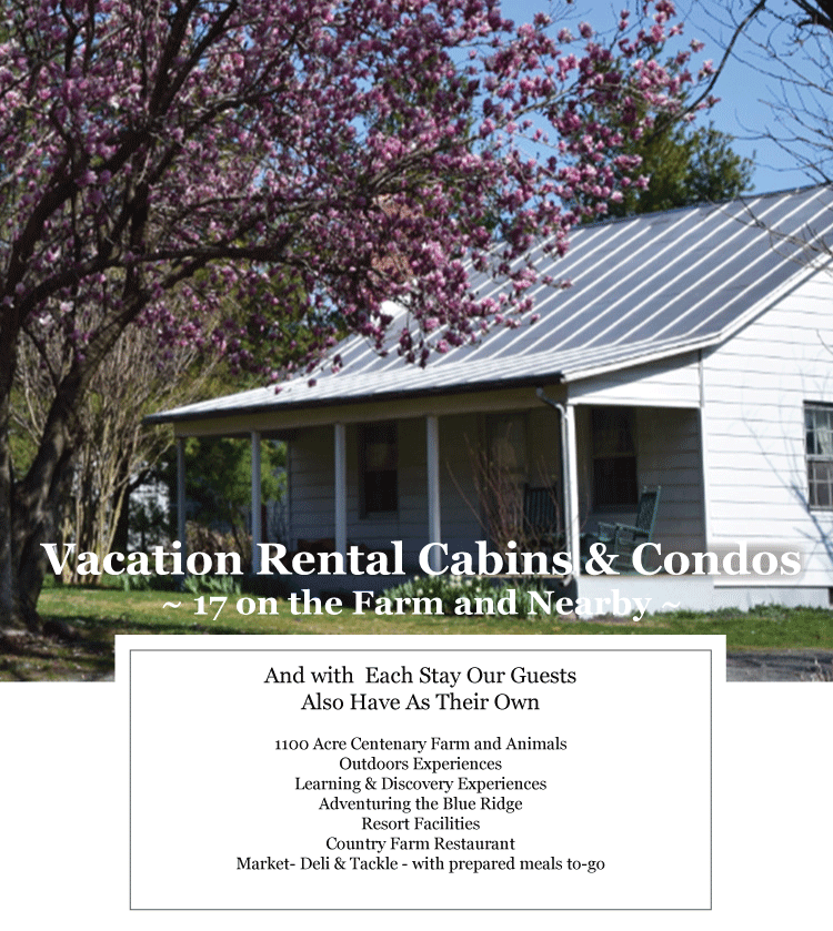 Cabin Vacation Rentals next to Shenandoah National Park at Graves Mountain Farm & Lodges