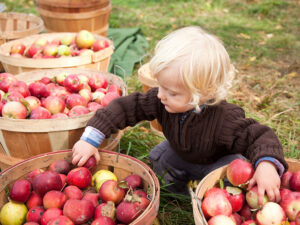 Apple Hravest Festival at Graves Mountain - October weekends