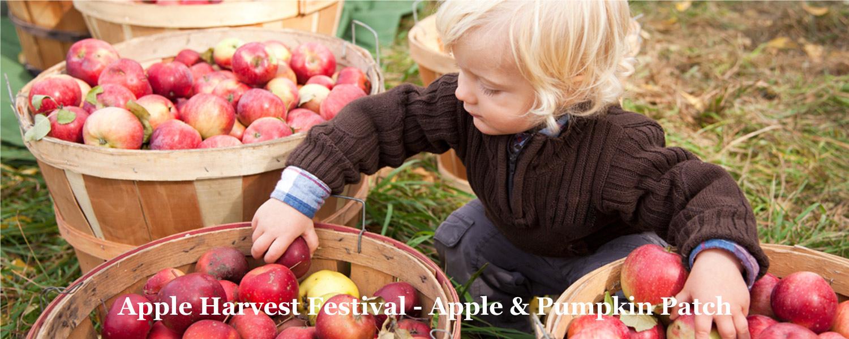 Apple Harvest Time at Graves Mountain Farm
