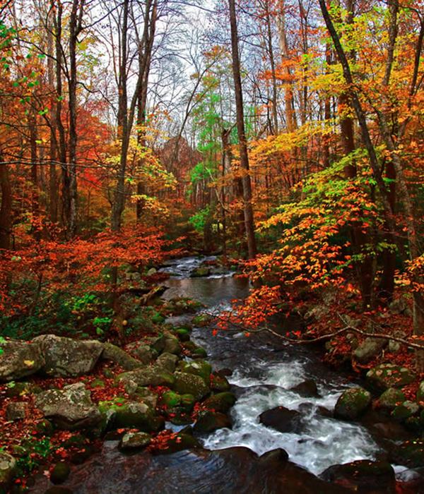 Fall Foliage in the VA Blue Ridge at Graves Mountain