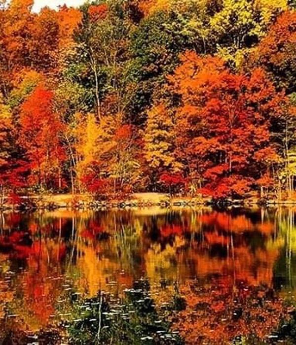 Meadows Pond - Fall at Graves Mountain Farm
