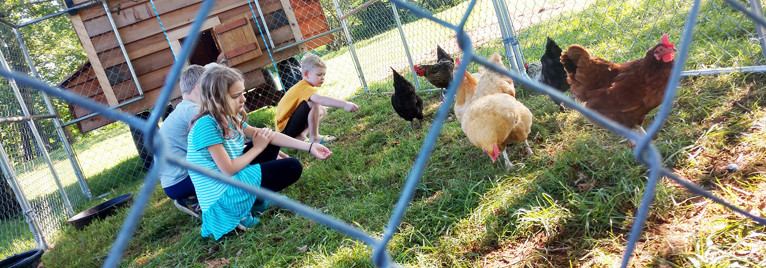 Collecting eggs and feeding chickens at Graves Mountain Farm