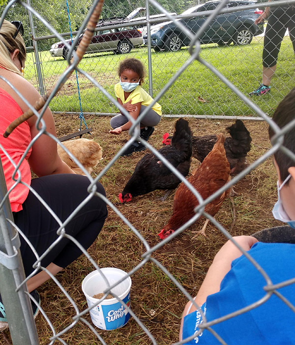 Chicks play and egg collecting at Graves Mountain Farm & Lodges
