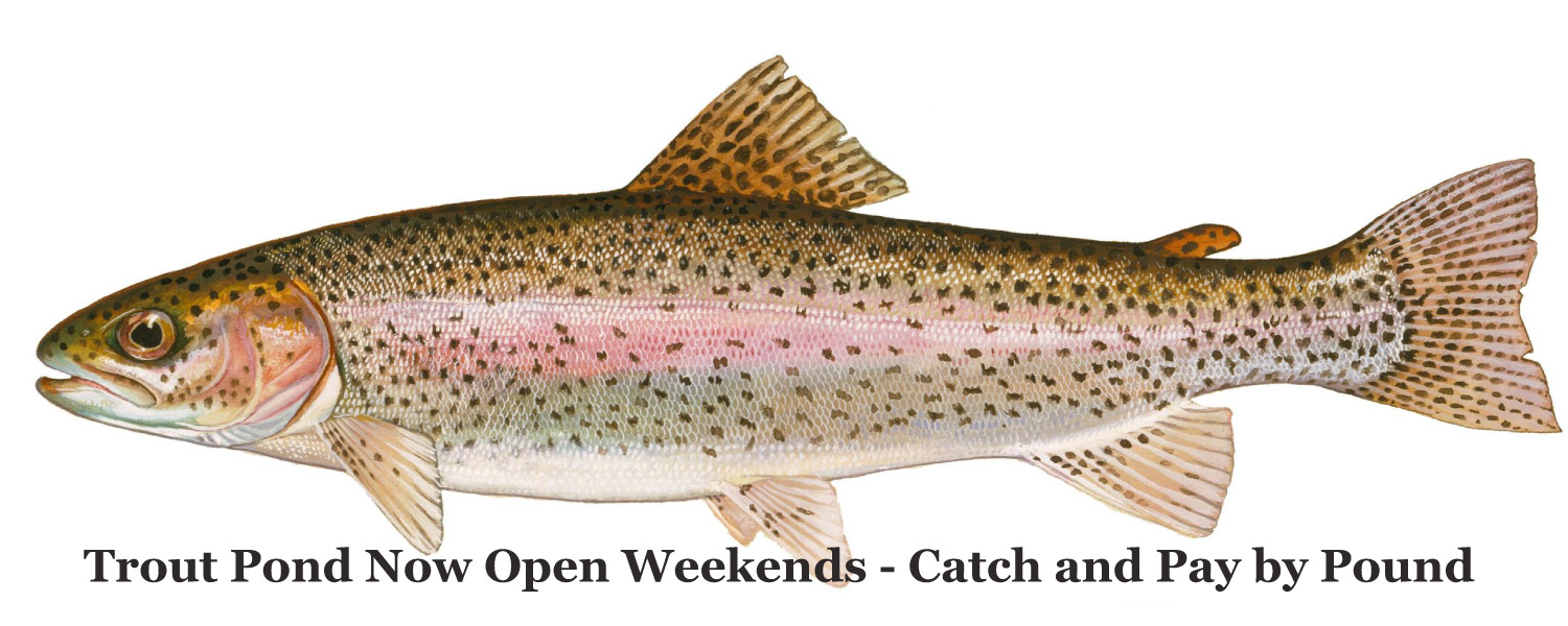 Trout Pond Fishing - stocked and ready to go at Graves Mountain Farm & Lodges