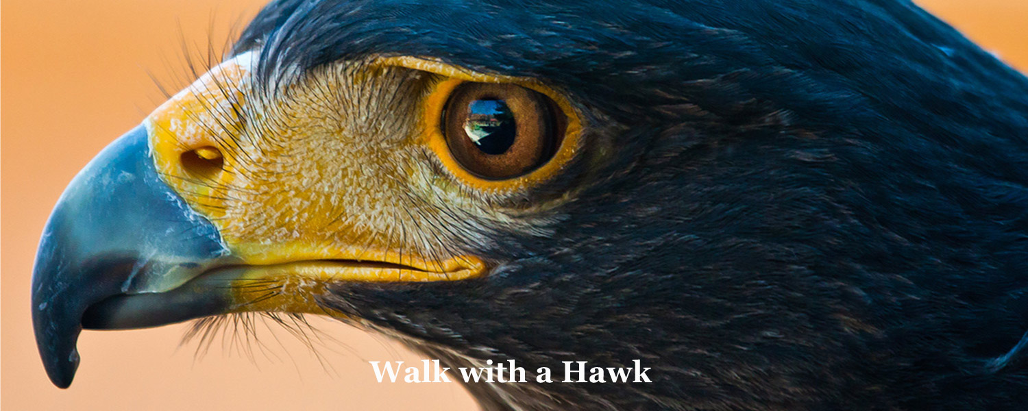 Walk with a Hawk at Graves Mountain Farm & Lodges