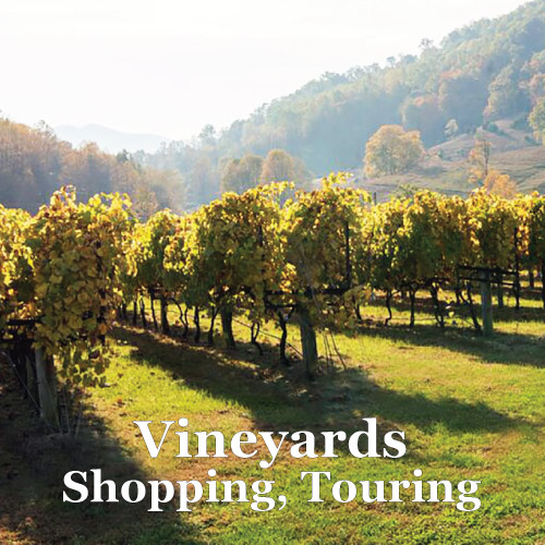 Vineyrad Tours from Graves Mountin Farm