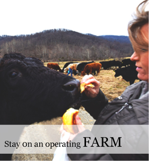 Farm stays in the Blue Ridge at Graves Mountain Farm