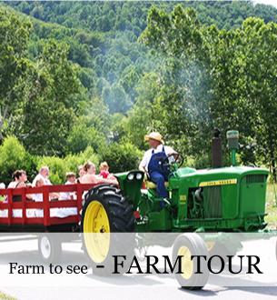 Farm Tours in Blue Ridge at Graves Mountain Farm