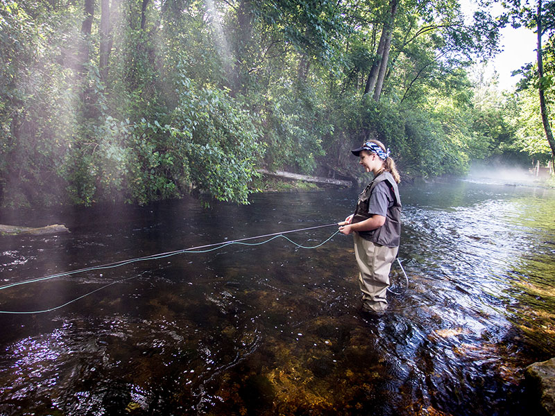 Fly Fishing for Mountain Native Trout or Stocked in Lower Portions