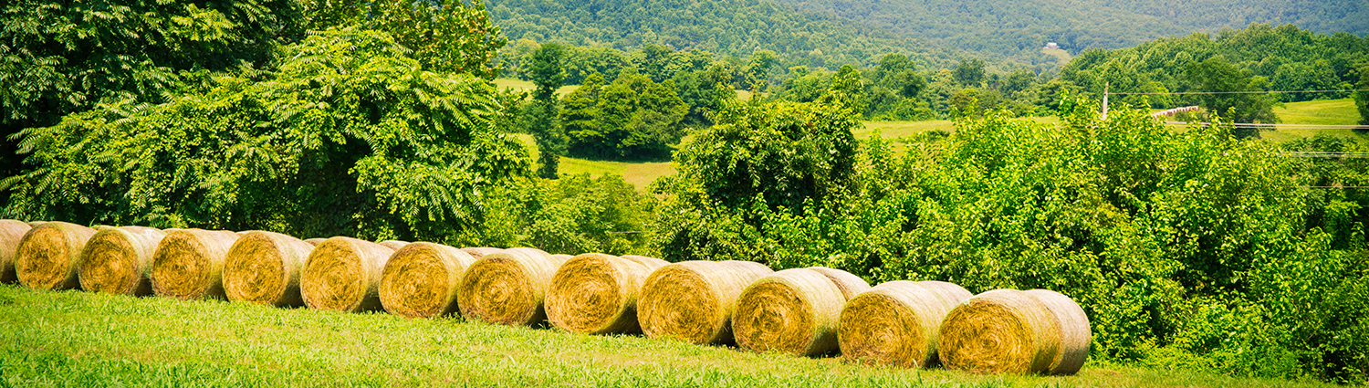 Hay bales in field with blue ridge mountains in the background in Amissville, Virginia.