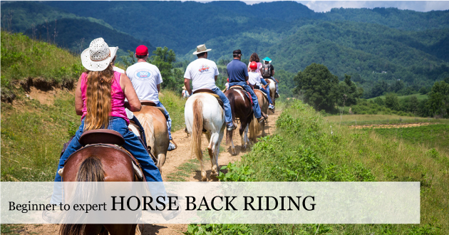 Blue Ridge Horse Back Riding - trail rides for beginner to expert. Lessons. Or Just get on and discover with Eddie and Leah here at the Farm