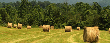 Hay bales ast Graves Mountain farm & Lodges, Syria VA, small meetings and retreats