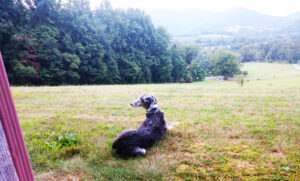 Pet rooms at Graves Mountain Farm & Lodges on the Blue Ridge of VA