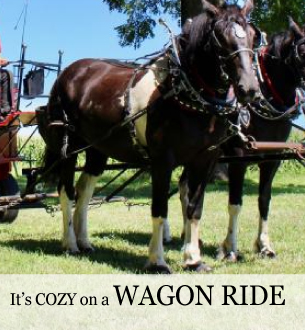 Horse and wagon rides on the Farm